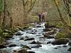 Paths (Defabled) Tags: paths gwynedd talybont