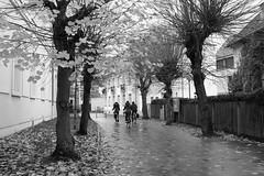 Where do we go? (gambajo) Tags: 1year1town1lens brühl outdoors public people bicycle bicycles blackandwhite blackwhite black white fall autumn trees leafs x100s fujix100s fujifilmx100s