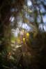 grace (pixiespark) Tags: leaf blatt unfolding entfaltend sunlight sonnenlicht bokeh spring frühling nature natur grace