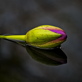Floating Bud