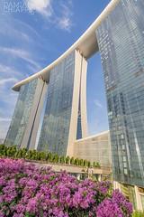 Singapur (Damián Chiappe) Tags: asia singapur singapore rascacielos skyscraper edificio building floresrosas pinkflowers arquitectura architecture ciudadesdeasia asiancities
