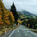 Caminitos de Nueva Zelanda