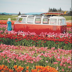 Let us live a life deep and full of wonder. (bluejstudio) Tags: landscape tulips tulip flowers nature fashion beauty beautiful sunshine spring summer travel canon natgeo nikon bus van vanlife vwvan usa oregon portland