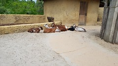 20180523_123858 (TheSlayerNL) Tags: wildlands emmen zoo dieren animals adventure wildlandsadventurezoo