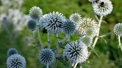 Anglų lietuvių žodynas. Žodis landscape-gardener reiškia kraštovaizdžio sodininkas lietuviškai.