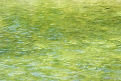 Шацький Національний Природний Парк Озеро Пісочне Прозора вода InterNetri  Ukraine 255