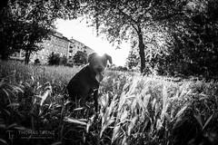 Alex Sunset BW (Thomas TRENZ) Tags: austria gras nikon stadt thomastrenz vienna blackwhite bw city dog fisheye friend samyang schwarzweiss sunset sw weekend wien wochenende österreich