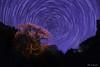 Kurofune Zakura with Star trail (稲垣一志) Tags: 桜 夜桜 黒船桜 しだれ桜 一本桜 星 星景 光跡 星グル 北極星 阿智村 長野県 日本 cherryblossom cherryblossomatnight kurofunezakura weepingcherry singlecherrytree star starfield startrail polaris achivillage naganopref japan