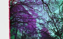 portland. (shoegazer.) Tags: lomo lca lomochrome purple 35mm film analog april 2018 portland oregon tree