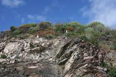 (brian dean bollman) Tags: montereycountyca siltstone westerngull carmelca pebblebeach