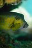 20170715-DSC_9500.jpg (d3_plus) Tags: 南伊豆 southizu drive fish marinesports apnea izu sea j4 underwater nikon1 景色 魚 水中 watersports wpn3 185mm closeuplens マリンスポーツ japan 風景 ニコン 50mmf18 50mm ニコン1 nikonwpn3 ウォータープルーフケース 素潜り クローズアップレンズ skindiving nikkor nikon スキンダイビング nikon1j4 inonucl165m67 sky 海 snorkeling ucl165m67 diving 1nikkor185mmf18 scenery 息こらえ潜水 ズーム port 185mmf18 空 日本 inon waterproofcase シュノーケリング zoomlense