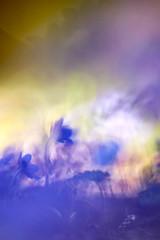 Spring Bokeh (matt.kueh) Tags: flower plant leberblümchen liverwort liverleaf kidneywort hepaticanobilis spring frühling bokeh bokehlicious vintagelens manualfocus m42 helios40285mmf15 sonya7ii sonyilce7m2