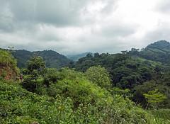 La Ciudad Perdida - Sierra Nevada de Santa Marta (nickturner5) Tags: teyuna southamerica hike trek green sony rx100 landscape laciudadperdida lostcity colombia moutains sierranevada santamarta jungle forest