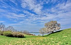 Frühling (Wunderlich, Olga) Tags: blüte mönchgut rügen insel mecklenburgvorpommernm natur landschaft hügel wasser