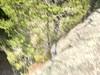Scarface Mountain (sarah.shelmidine) Tags: saranac saranac6er lake adk ad adirondacks adirondack adks scareface mountain scarface hike woods