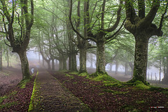 Camino en el hayedo (Jabi Artaraz) Tags: urkiola jartaraz jabiartaraz hayas pagoak hayastrasmochas centenarias árboles niebla bruma primavera udaberria