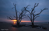 Takes Two to Tangle (Christina DeAngelo) Tags: trees dead bare lonely two pair limbs branches twigs beach shoreline ocean sea south carolinas lowcountry southcarolina charleston botanybay boneyardbeach sunrise sunset bluehour silence landscape nature