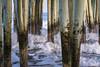 Flux (Mylene Gauthier) Tags: 2018 atlantique bleu brun ciel contédeyork crépuscule eau lumière maine mars mylenegauthier nikond7100 océan oldorchardbeach paletteprintanière paysagepolychrome printemps étatsunis