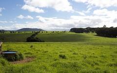 565 Old Coast Road, Dorrigo NSW