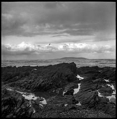 the rocks (joseph_kop) Tags: flexaret twinlens hp5 bwfilm bw ilford darksky