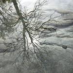 reflections thumbnail