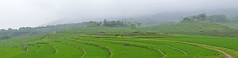Pu Luong (ngocnta.1311) Tags: landscape ricefield vietnamlandscape