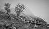 Gnarled & Exposed (kieran_metcalfe) Tags: 80d snowdonia landscape nature mist mountains canon penypass haze wales tree cloud llanberis ridge fog gnarled countryside trees recession