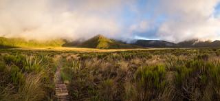 Ahukawakawa Swamp panorama