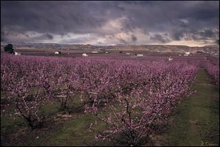 Campos de primavera.