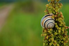 DSC_3926 (emina.knezevic) Tags: snail nature naturephotography grass insects wildlife macro plant flower
