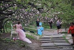 Ботанічний сад імені Гришка Цвітуть магнолії InterNetri  Ukraine 204