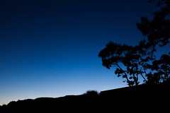 Venus Creeping (Joel Apple) Tags: longexposure pacificnorthwest silhouette vancouverisland things nightphotography canada victoria britishcolumbia places northamerica