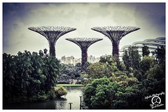 Super Trees at Gardens By The Bay, Singapore (Jared_Rawlins) Tags: landscape nikon beautiful asia original march singaporeflyer ferriswheel asian singapore garden landscapephotography marinabay travelbloggers flyer dark ilovesingapore modernart lights supertrees flickr gardens day photography sky daytime beautifulmatters gardensbythebay bay