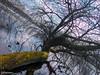 Spring is coming (0082) (Stefan Beckhusen) Tags: mossytree gnarlytree springseason sky sunny sun tree outdoor vegetation ecosystem season seasonal growth lake pond water diagonale
