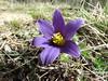 IMG_8209 (germancute) Tags: nature wildflower blume flower outdoor wald walk wiese