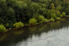 (jo.alvarezv) Tags: naturaleza nature naturalezachilena chileannature chile surdechile chileansouth villarrica rio river rivera riverbed