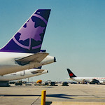 Purple Maple Leaf: Air Canada Tango thumbnail
