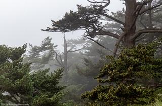 Bluff Top Trees