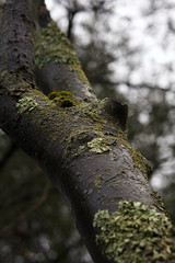 lichen (meara!) Tags: moss tree lichen spring springtime canon rainy day photography meara green colours bark nature branches trunk trees forest woods woodsy
