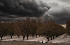 the calm before the storm... (Alvin Harp) Tags: sonyilce7rm3 fe2470mmf28gm cloudsstormssunsetssunrises orchard darkclouds beehives californiacentralvalley wasco california march 2018 ominousclouds alvinharp i99 i5 ca56