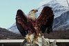 décoration extérieure (8pl) Tags: aigle statue extérieur albanie montagnes nord déco