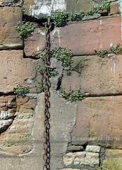 Canning Dock Wall Flowers (.annajane) Tags: liverpool uk canningdock dock wall flower chain merseyside england