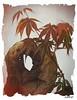Mopani still life 2 (JAKE473) Tags: mopani log acer