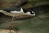 DSC_0139 (nicotr) Tags: 20180323 oiseaux serretropicale zoo échasse