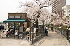 Sumida Park (takashi_matsumura) Tags: taitōku tōkyōto japan asakusa sakura cherry blossoms sumida park nikon d5300 spring afp dx nikkor 1020mm f4556g vr