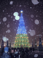 Blurred picture of christmas tree at the snowfall with lights (mironenko1990) Tags: snow christmas tree background winter fall new year xmas white blue holiday landscape light falling snowfall vector abstract card decoration merry night design wood cold season beautiful bokeh snowy ice snowflakes seasonal greeting flake nature