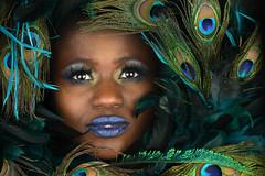 Feather Ann (PVA_1964) Tags: nikon d850 model female woman girl studio africanamerican black blue mua samys samyscamera ann modelmayhem cls wirelessflash westcott apollo apolloorb sb5000 radiocls wr10 ttl