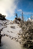 (daniel.hughley) Tags: angelescresthighway angelesnationalforest cran hiking snow threepoints watermanmountaintrail