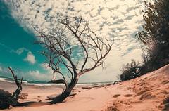 Rustic Ocean (San Andrés, Col) (Julio César Macías (Video & Photography)) Tags: gopro hero5 colombia sanadres bogotá gopro6 gopro5 beach ocean sea love water vacations arbol paisaje árbol