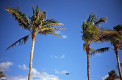 Flying birds (Todron) Tags: lomo lomography lca ussr madeinussr minitar 32mm 32mmf28 wide wideangle grandangolo filmcamera film compactcamera compatta commiecamera fuji fujifilm fujichrome velvia fujichromevelvia100f 100asa diapositiva slide transparency e6 epson epsonv600 v600 miami miamibeach southbeach florida usa sky bluesky palms palme aereo aircraft